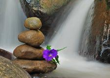 Purpurrote Blume auf Zenfelsen gründete mit flüssigem Wasser um sie Stockfoto