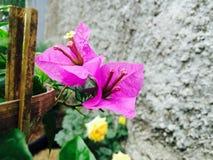 Purpurrote Blume blühen im Tageslicht stockbilder