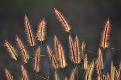 Purpurrote Blume in der Wiese lizenzfreies stockfoto