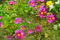 Purpurrote Blume in der wilden Natur Stockbilder