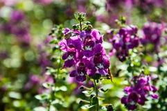 Purpurrote Blume des Hintergrundes mit der Sonne Stockfotografie