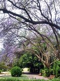 Purpurrote Blume im Garten lizenzfreie stockfotos