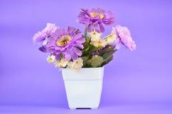 Purpurrote Blume im Topf stockbild