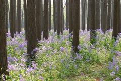Purpurrote Blume im Wald Stockfotos