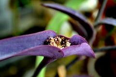 Purpurrote Blume im wilden Lizenzfreies Stockfoto