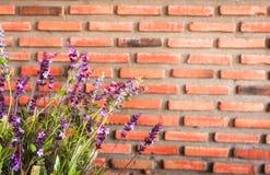Purpurrote Blume mit Backsteinmauerhintergrund Stockfoto