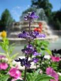 Purpurrote Blume mit Brunnenhintergrund Stockfotos