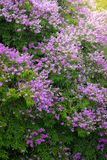Purpurrote Blume mit einem Laubbaum im Wald Stockfoto
