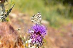 Purpurrote Blume mit Schmetterling Stockfotografie