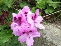 Purpurrote Blume morgens lizenzfreies stockbild