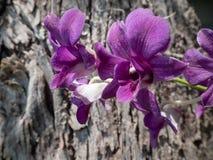 Purpurrote Blume am Tag stockfotos