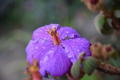 Purpurrote Blume in thr-Garten stockfoto