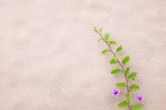 Purpurrote Blume und Anlage verzieren auf dem Strand Stockfotos