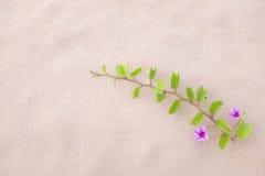 Purpurrote Blume und Anlage verzieren auf dem Strand Lizenzfreies Stockfoto