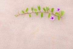 Purpurrote Blume und Anlage verzieren auf dem Strand Stockbild