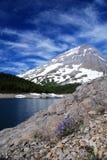 Purpurrote Blume vor Berg Stockbild