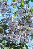 Purpurrote Blumen Lizenzfreies Stockfoto