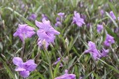 Purpurrote Blumen Stockfoto