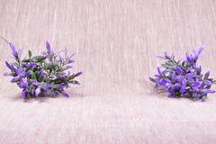 Purpurrote Blumen auf einem beige Leinenhintergrund Lizenzfreies Stockfoto