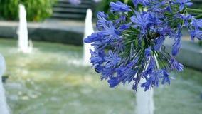 Purpurrote Blumen auf einem Hintergrund eines Brunnens Lizenzfreies Stockfoto
