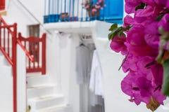 Purpurrote Blumen auf Mykonos lizenzfreies stockbild