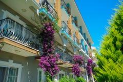 Purpurrote Blumen am Balkon lizenzfreies stockbild