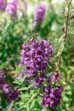 Purpurrote Blumen blühen im Garten lizenzfreie stockfotografie