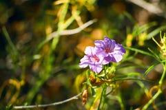 Purpurrote Blumen-Blüte Stockfotos