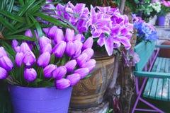 Purpurrote Blumen in den Töpfen vor dem Haus lizenzfreie stockbilder