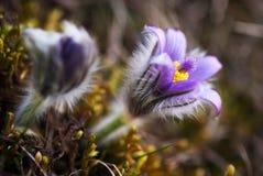 Purpurrote Blumen in der Natur Stockbilder