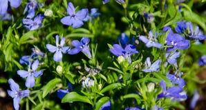 Purpurrote Blumen in der Sonne Stockbild