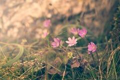 Purpurrote Blumen in der wilden Natur lizenzfreies stockbild