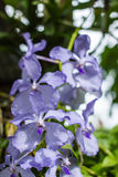 Purpurrote Blumen in der wilden Natur Stockbild