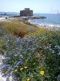 Purpurrote Blumen durch das Küstenschloss lizenzfreie stockfotos