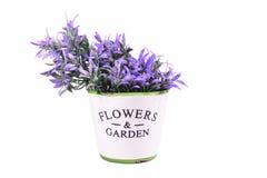 Purpurrote Blumen in einem dekorativen Topf auf einem weißen Hintergrund Lizenzfreies Stockbild