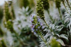 Purpurrote Blumen in einem Park stockbild