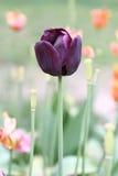 Purpurrote Blumen in einem Park Stockfoto