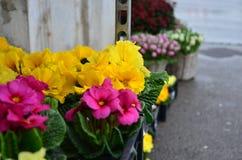 Purpurrote Blumen in einem Topf auf der Straße Stockfoto