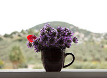 Purpurrote Blumen in einer Schale auf einem Hintergrund von Bergen Lizenzfreie Stockfotos