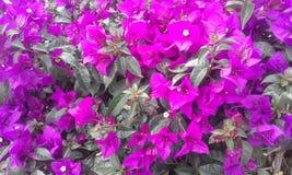 Purpurrote Blumen Exotische Anlage, exotische Blumen Lizenzfreies Stockbild