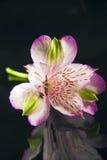 Purpurrote Blumen-Frontseite Stockbild