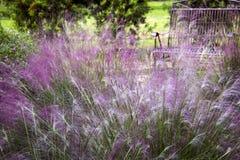 Purpurrote Blumen im Garten Stockbild