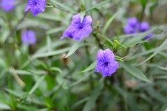 Purpurrote Blumen im grünen Garten Lizenzfreies Stockbild