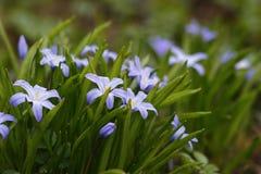 Purpurrote Blumen im Gras stockbild