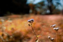 Purpurrote Blumen im Sommer stockbild