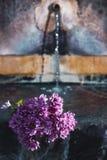 Purpurrote Blumen im Wasser stockfotos