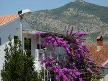 Purpurrote Blumen, kleine Häuser und Berge in Budva, Montenegro Stockfoto
