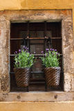 Purpurrote Blumen Llittle im alten Fenster Stockbild