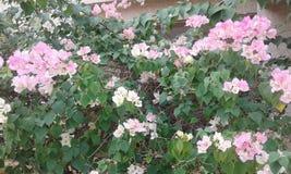 Purpurrote Blumen mit grünen Blättern lizenzfreies stockbild