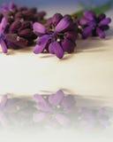 Purpurrote Blumen mit Reflexion stockfoto